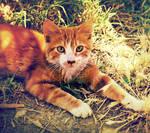 gattous