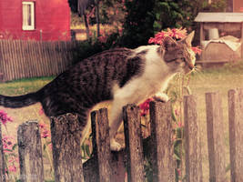 Nathaniel, the country cat by DarkBrownie