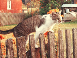 Nathaniel, the country cat v.2 by DarkBrownie