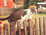 Nathaniel, the country cat v.2