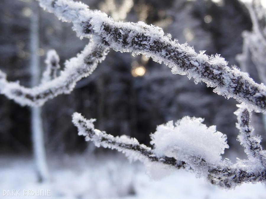 The spirit of snow by DarkBrownie