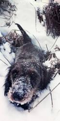 Kora is posessed by snow! by DarkBrownie