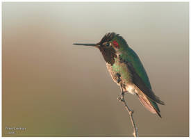 hummingbird spirit by PeterJCoskun