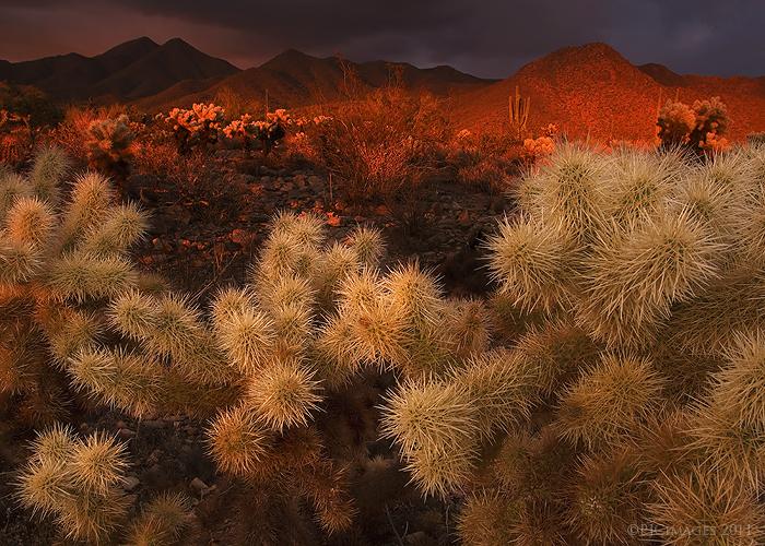 Desert light by PeterJCoskun