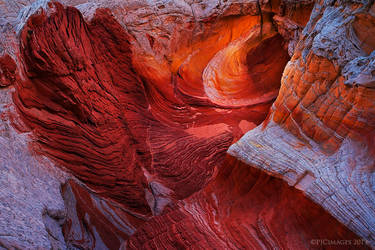 Vermilion Eye by PeterJCoskun