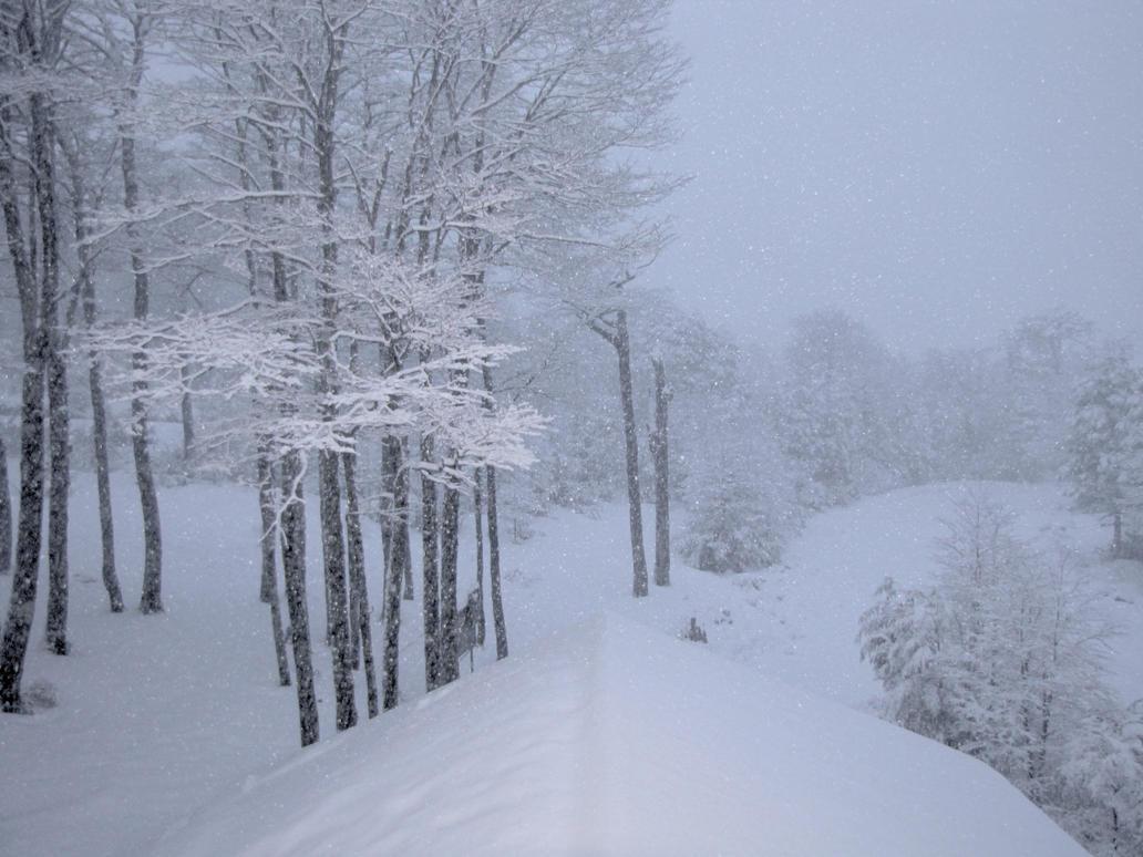 Nieve, nieve es lo que veo by DVHeld