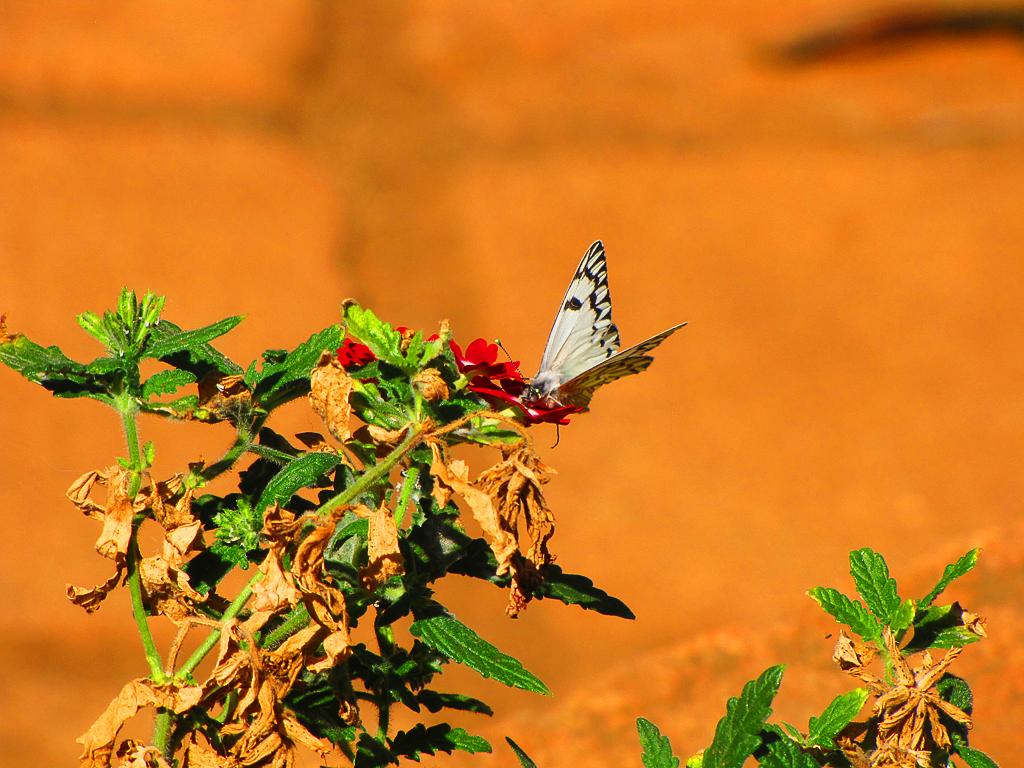 La Mariposa by DVHeld