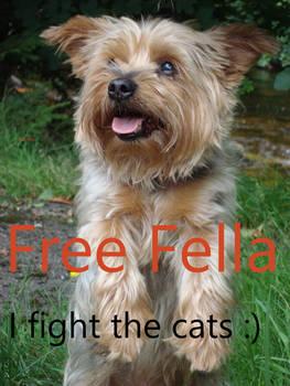 Free Fella!!!!!!!!!!!!!!!!!!!!!!