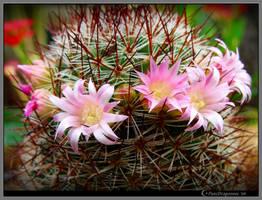 Amongst Thorns