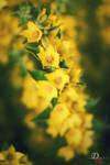 Yellow Flowers #2