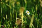 White Flower #4