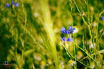 Blue Flowers #2