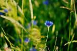 Blue Flowers #3