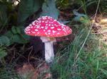 Mushroom stock 2