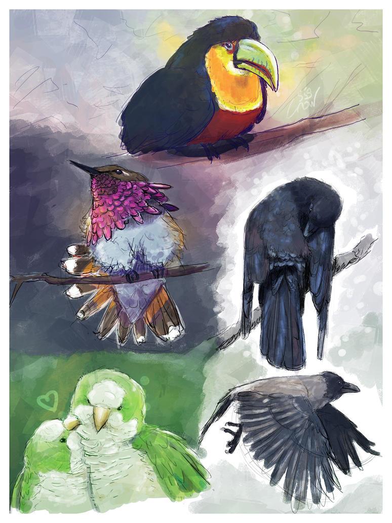 Birds by crow559