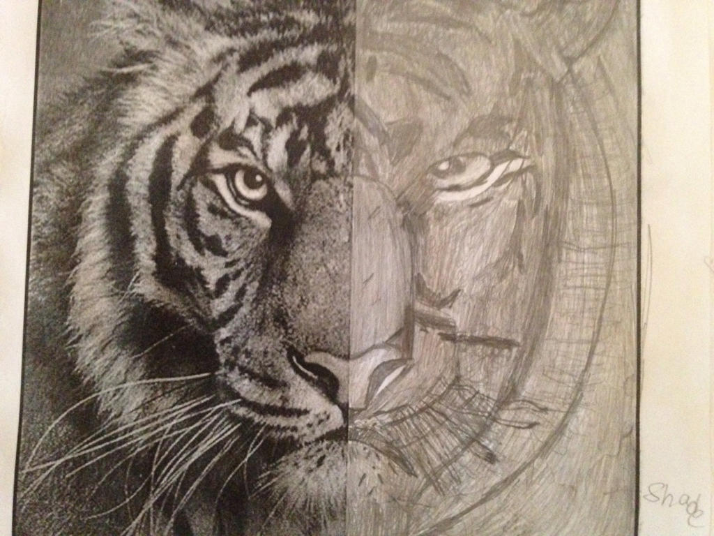 Elements Of Design Value : Element of design value tiger drawing by db on deviantart