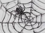 Shibari-spider