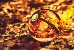 Arcanine in a Pokeball