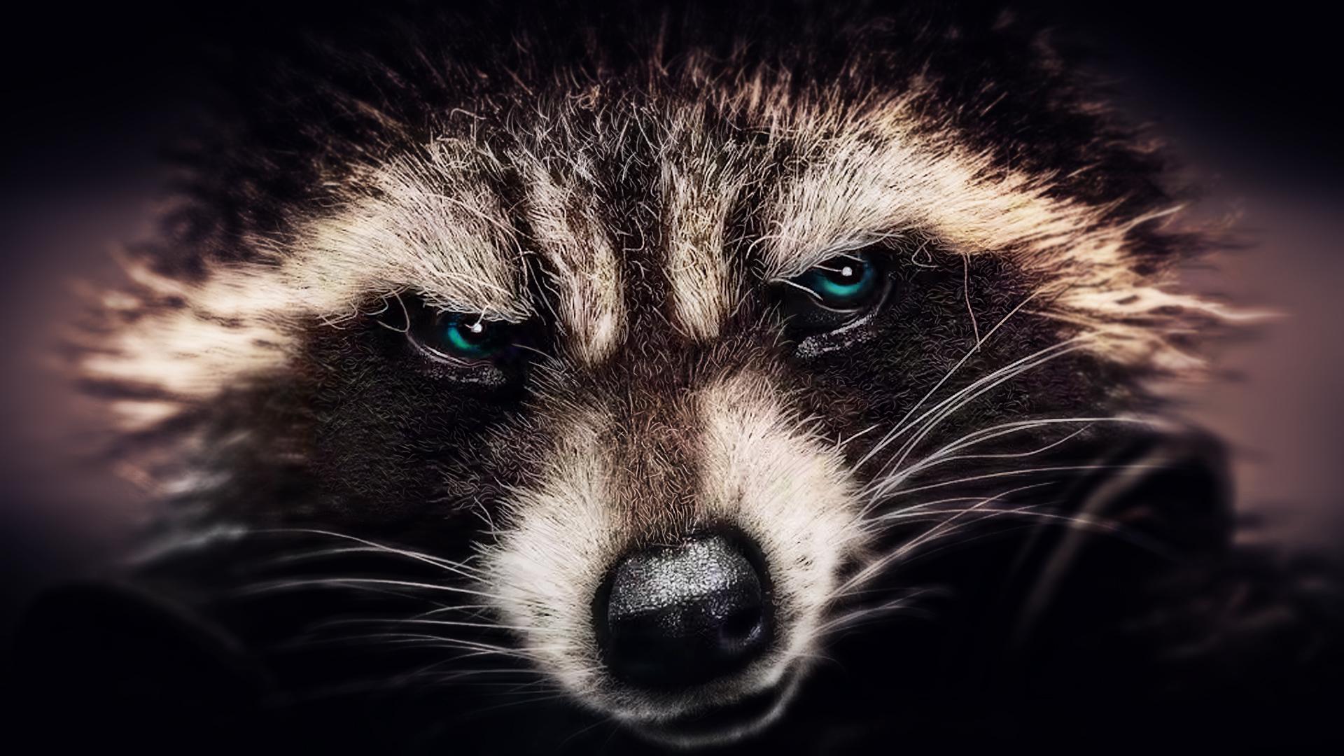 Rocket Raccoon wallpaper (6) by BiigM on DeviantArt Raccoon Face Clip Art