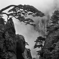 Hidden Dragon by Chaerul-Umam