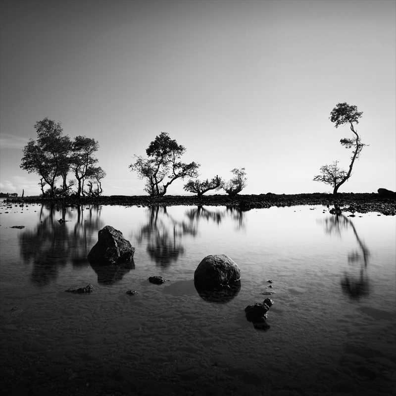 Thea-Tree-cals by Chaerul-Umam