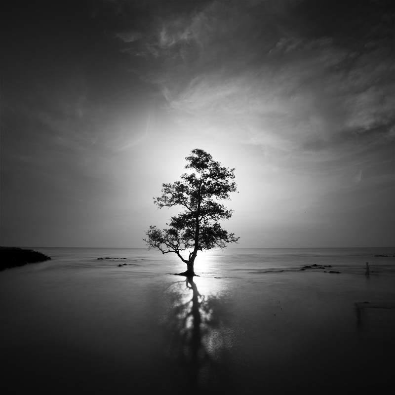The Tree and the Story of 2 Humans by Chaerul-Umam