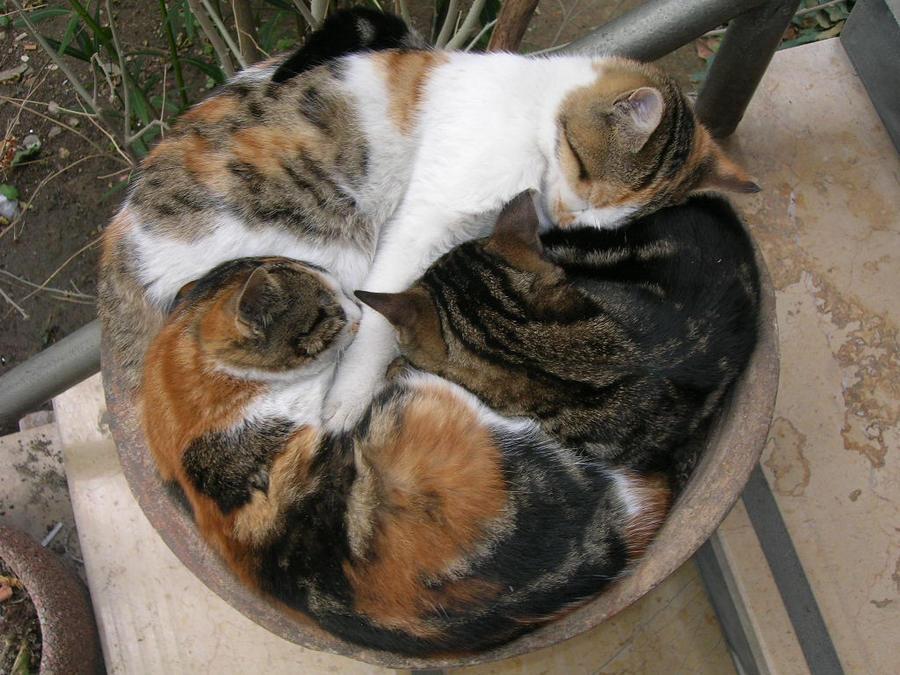 cats by gazozz