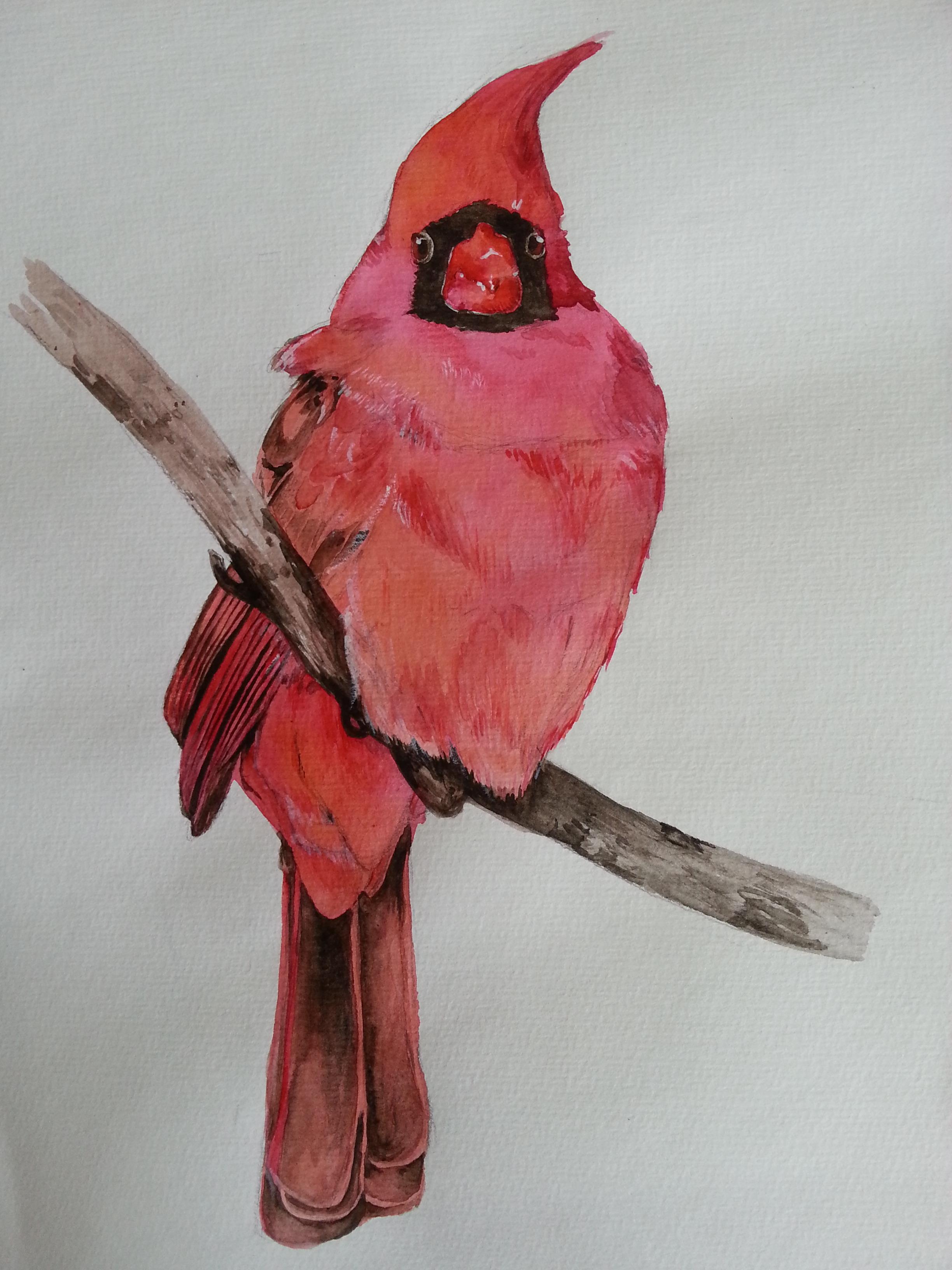 Northern cardinal by sanzoshing