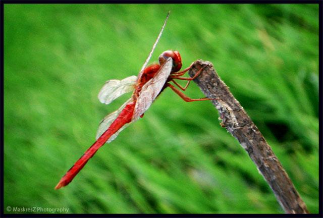 The Fly by MaskresZ