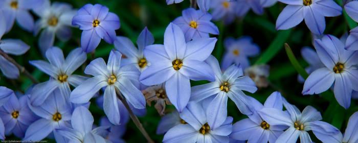 Blue Hana by juliekoesmarno