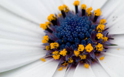 Smaller Flowers by juliekoesmarno