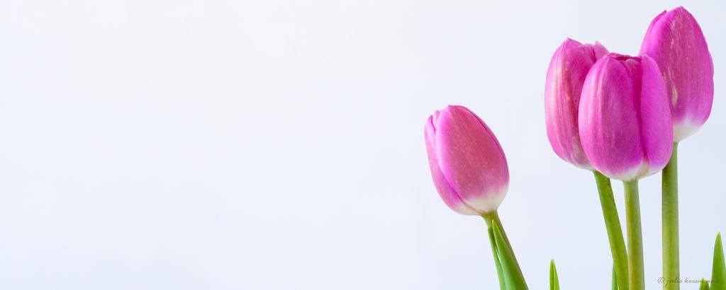 Spring Pink by juliekoesmarno