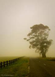 Tree by juliekoesmarno
