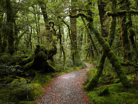 Fairytale forest by lmsgblh