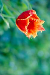 April flowers by wilfriedF