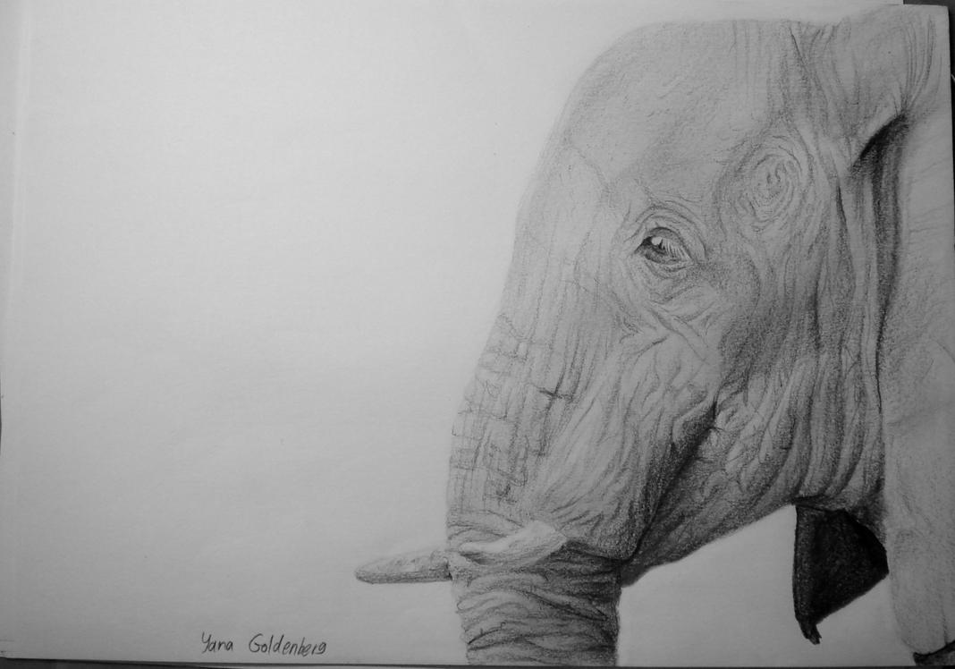 Elephant by ItsMyUsername