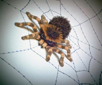 Spider by masikichydasiki