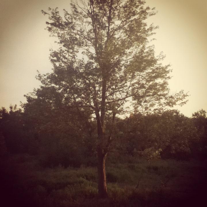 IZ TREES by LunaPicture