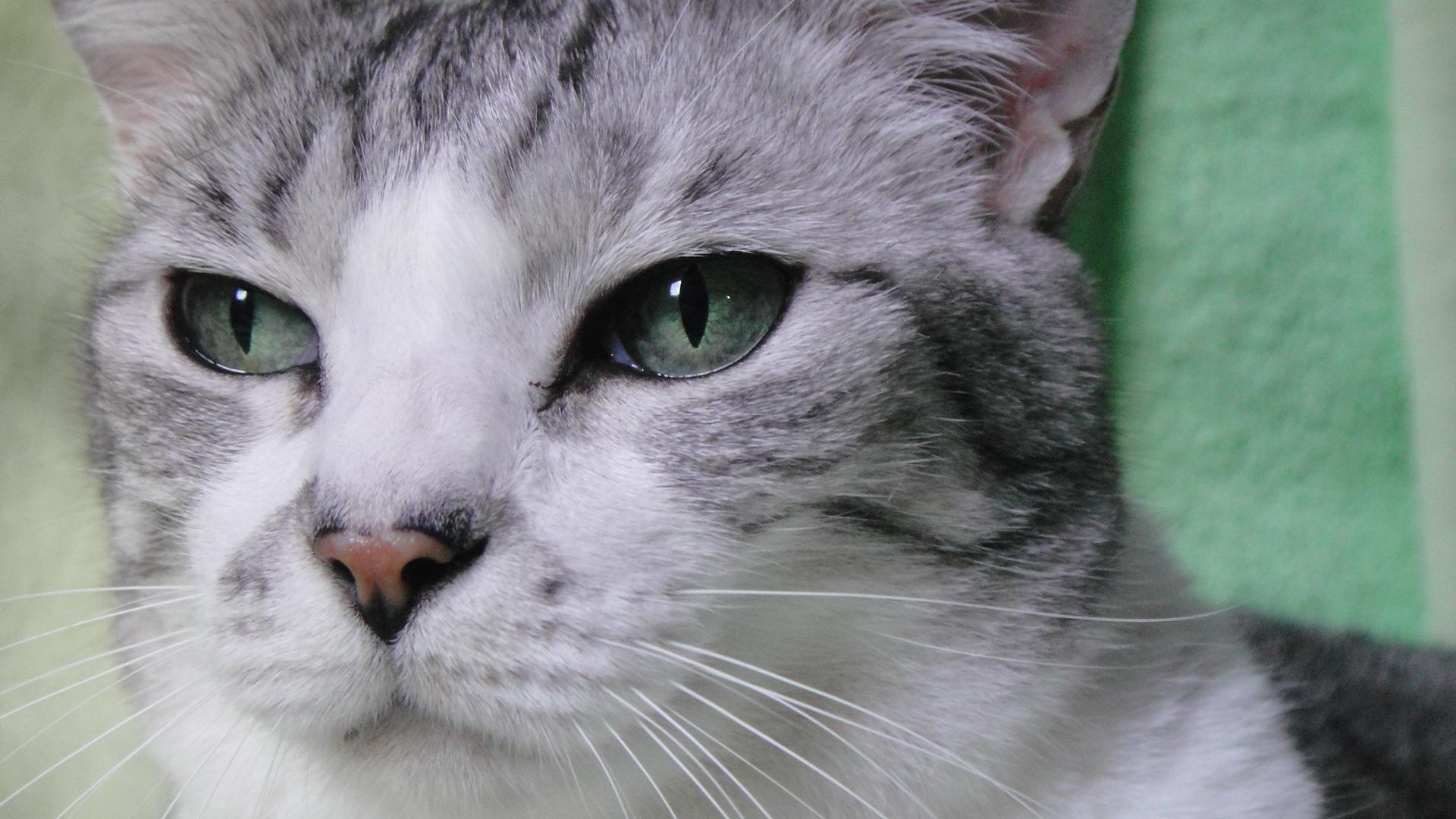 Hikaricats22's Profile Picture