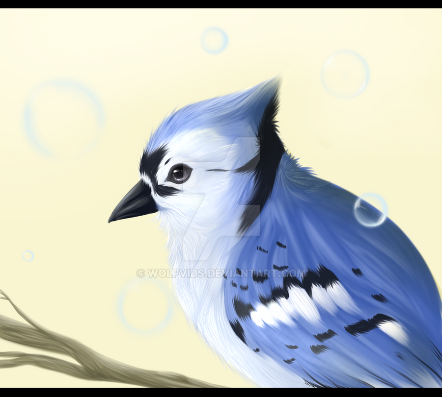 Bluejay By Wolfvids On DeviantArt
