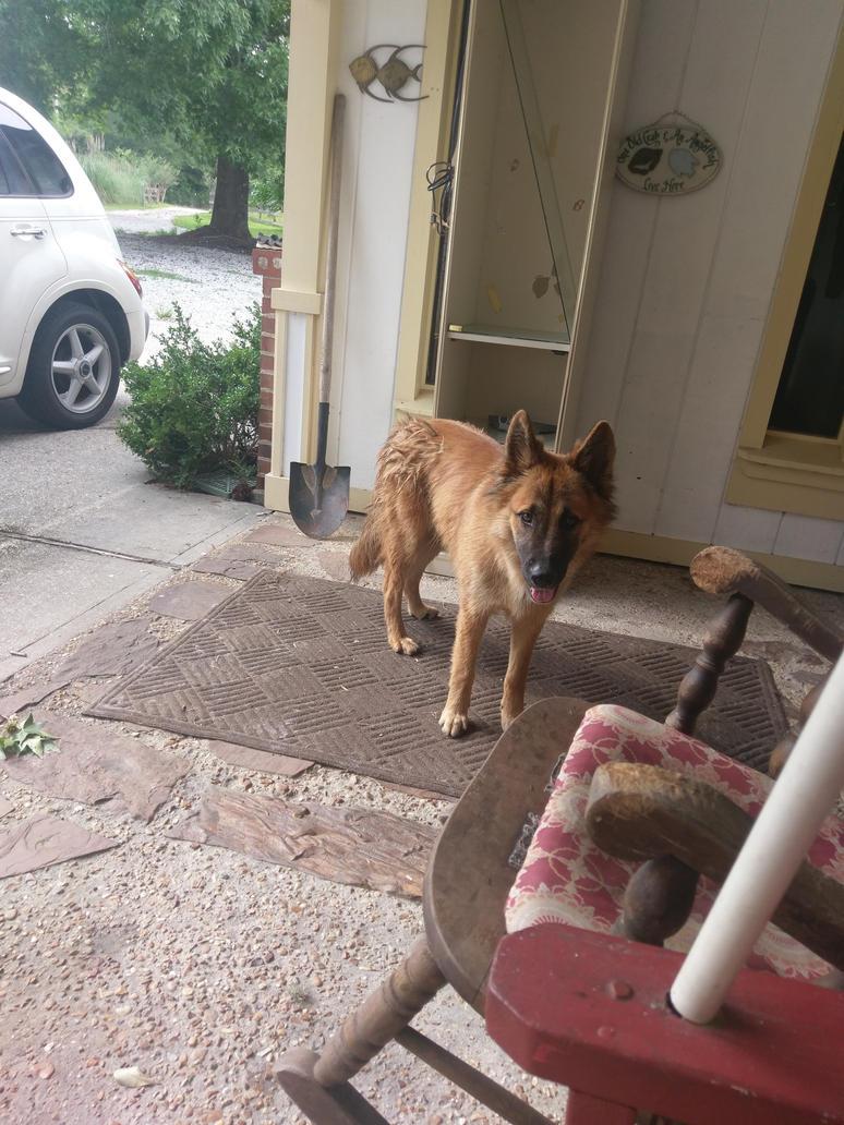 Look at dis doggo by GoodwolfBadwolf101