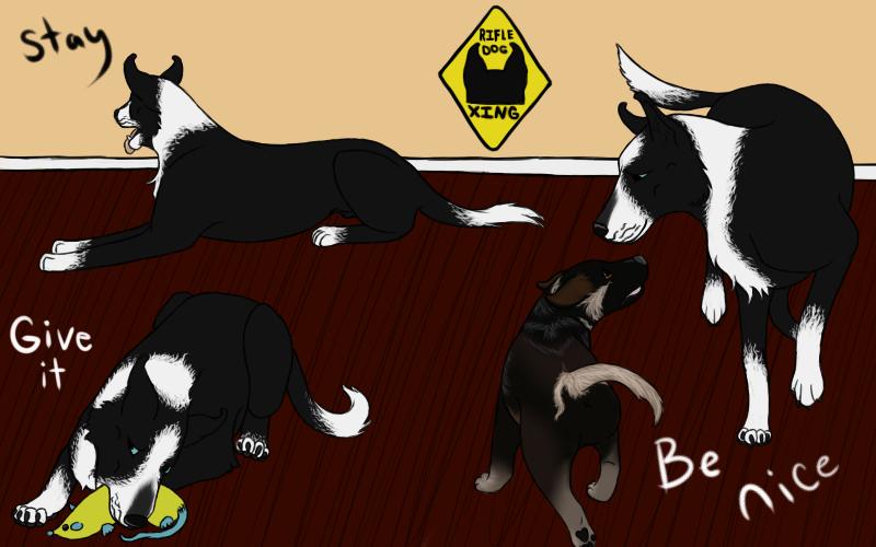 Cash Puppy Training by dragonqeen1010