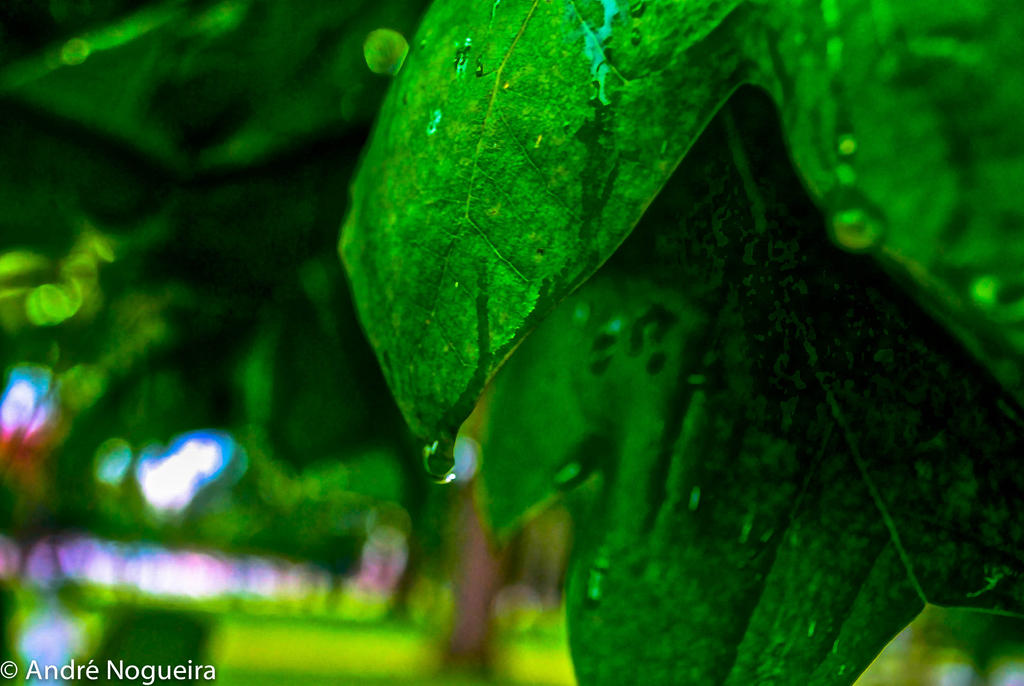 A Leaf Tearing by andrecln