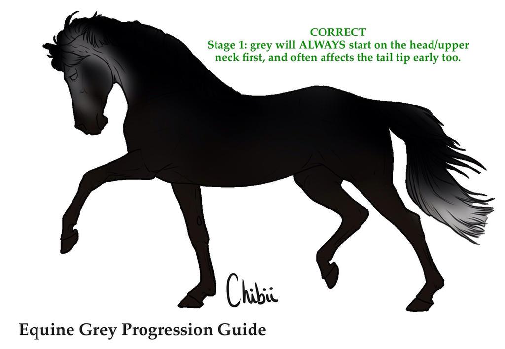 Equine Grey Progression Guide by MistyofSunrise on DeviantArt