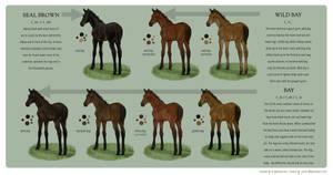 Equine Colour Guide :: Bay I