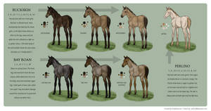 Equine Colour Guide :: Bay 2