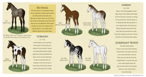Equine Colour Guide :: KIT genes by MistyofSunrise