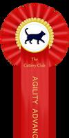 TCC Agility Advanced Ribbon