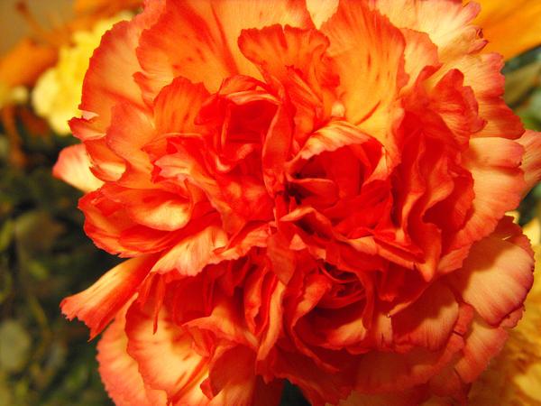 Funeral Flower 2 by LadyRavenhawk