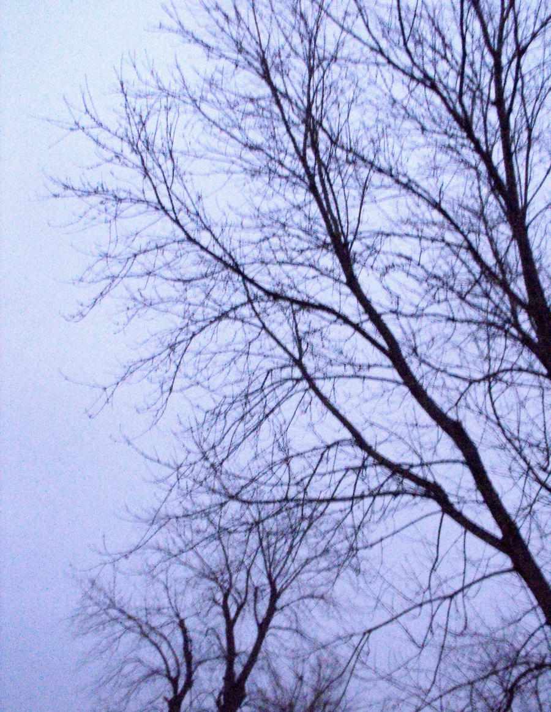 Winter by LadyRavenhawk